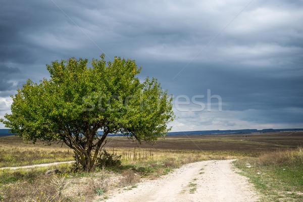 Boom blauwe hemel een weg voorjaar gras Stockfoto © Nickolya