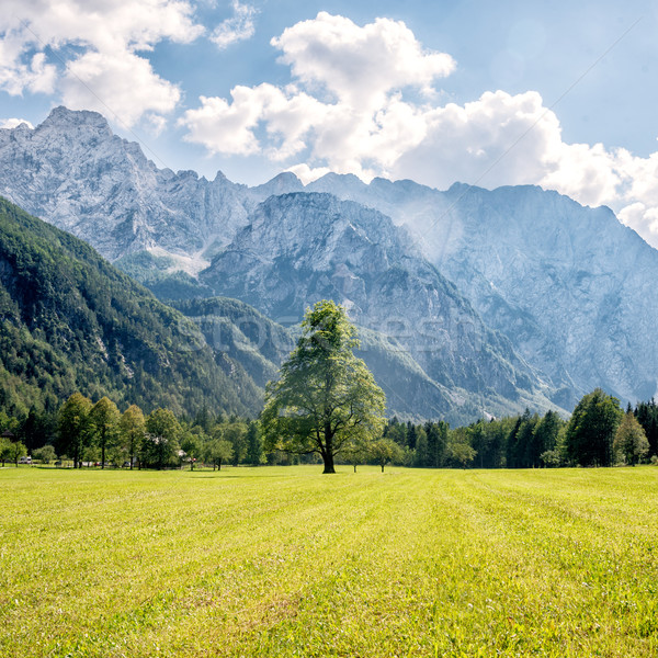 Mountain valley with green trees Stock photo © Nickolya