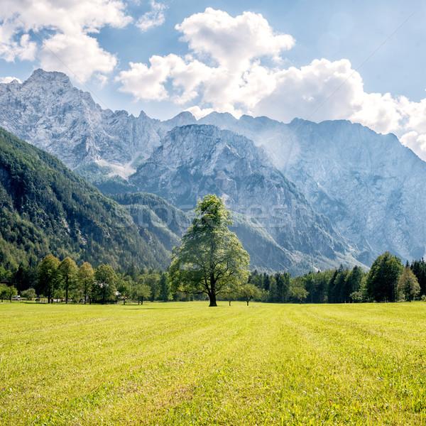 Berg vallei groene bomen Slovenië gras Stockfoto © Nickolya