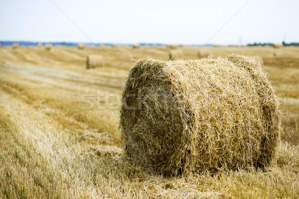 Hooi veld oogst hemel landschap achtergrond Stockfoto © Nickolya