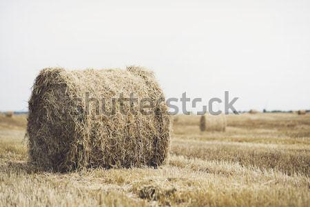 Feno campo colheita céu paisagem fundo Foto stock © Nickolya