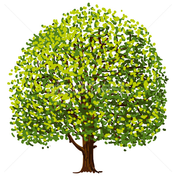 Fa rajz illusztráció zöld levelek izolált fehér Stock fotó © nikdoorg