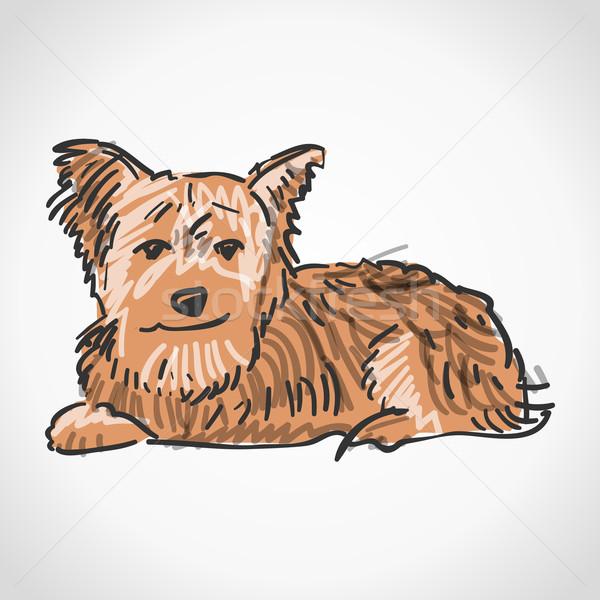 сидят Йоркшир терьер иллюстрация коричневая собака изолированный Сток-фото © nikdoorg