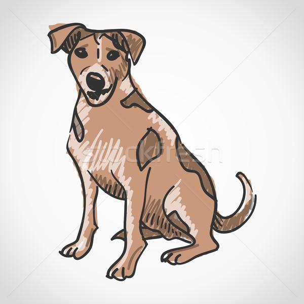 ジャックラッセルテリア 国内の ペット 犬 孤立した ストックフォト © nikdoorg