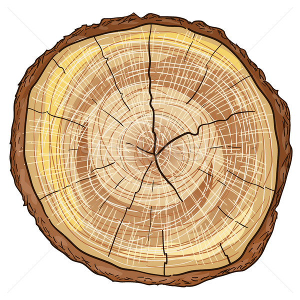 Madeira marrom madeira cortar isolado branco Foto stock © nikdoorg