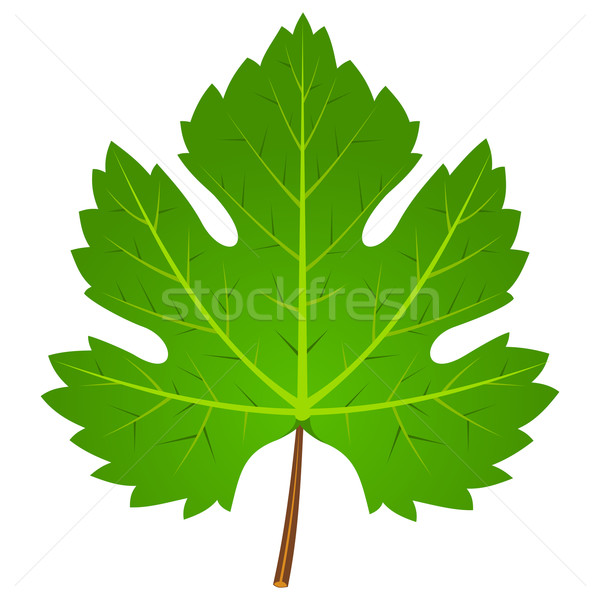 Green Wine Leaf Stock photo © nikdoorg