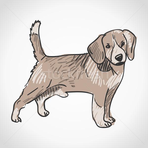 Bigle cão bonitinho animal de estimação animal Foto stock © nikdoorg