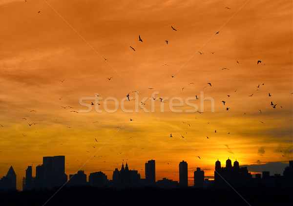 Manhattan oiseaux battant New York Skyline crépuscule Photo stock © nikdoorg