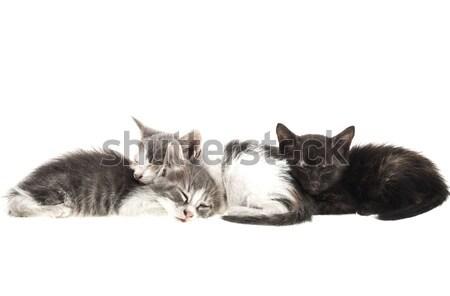 Küçük kedi yavrusu üç yalıtılmış beyaz eğlence Stok fotoğraf © NikiLitov