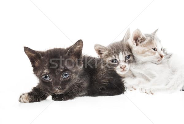 Kicsi kiscica három izolált fehér szemek Stock fotó © NikiLitov