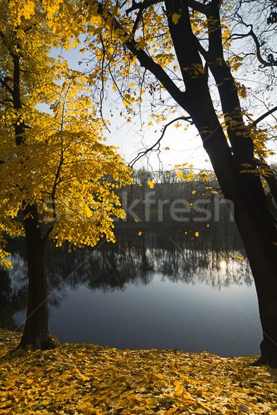 Calm autumn Stock photo © nikitabuida