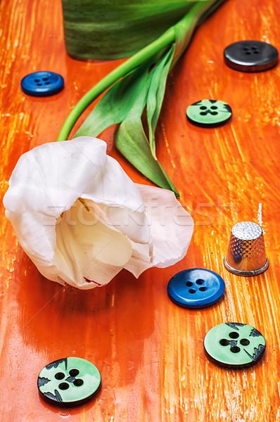 チューリップ ボタン スレッド 白 オレンジ 木製 ストックフォト © nikolaydonetsk