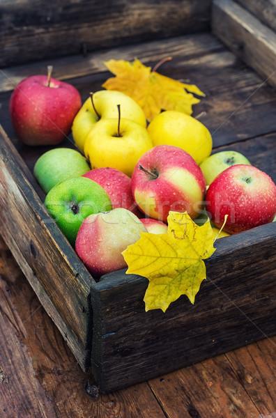 Sonbahar elma kırsal stil hasat elma Stok fotoğraf © nikolaydonetsk