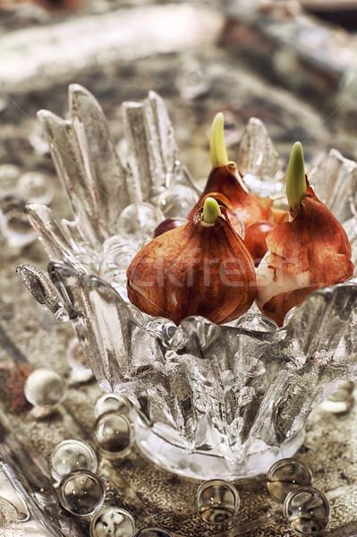 sprouted bulbs plants Stock photo © nikolaydonetsk