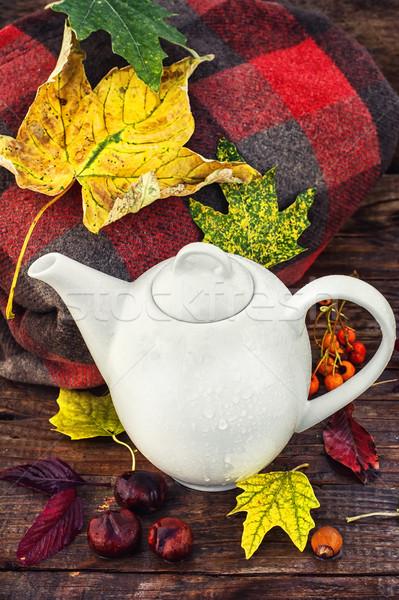 Still life late autumn Stock photo © nikolaydonetsk