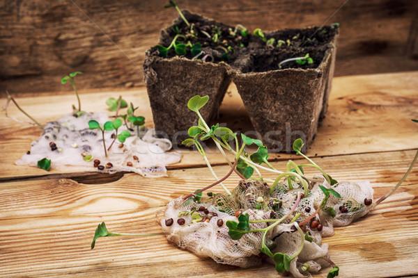 Spruit plant voorjaar agrarisch planten Stockfoto © nikolaydonetsk