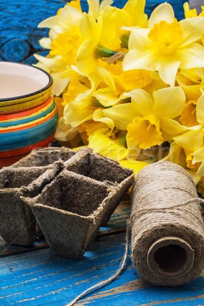garden tools and cut daffodils Stock photo © nikolaydonetsk