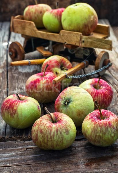 Sonbahar hasat elma ahşap arka plan sembolik Stok fotoğraf © nikolaydonetsk