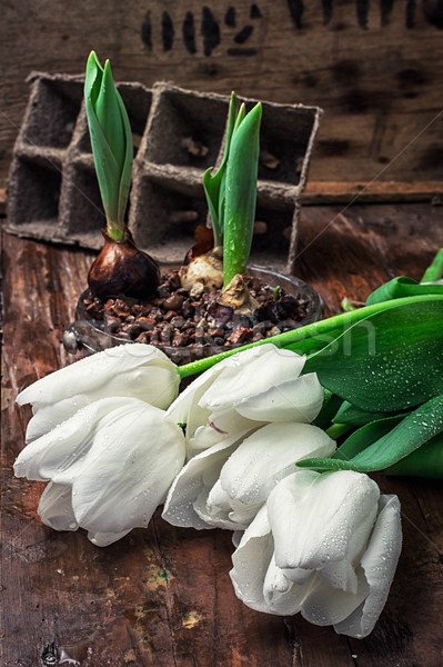 Lale beyaz taze kesmek doğa bahçe Stok fotoğraf © nikolaydonetsk