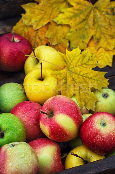 осень яблоко сельский стиль урожай яблоки Сток-фото © nikolaydonetsk