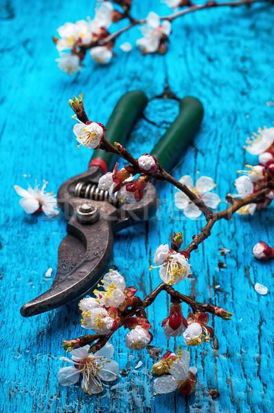 garden tools  Stock photo © nikolaydonetsk