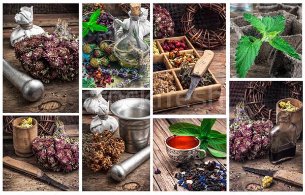 collected harvest medicinal herbs for medicinal  Stock photo © nikolaydonetsk
