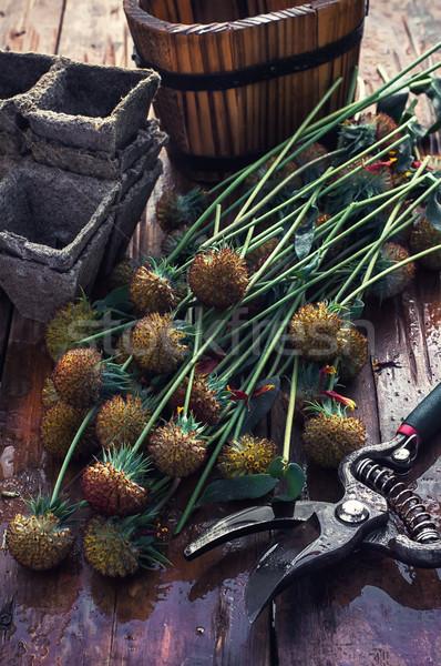 Cut autumn plants Stock photo © nikolaydonetsk