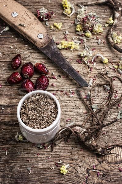 Foto stock: Raízes · secas · medicina · alternativa · comida · natureza