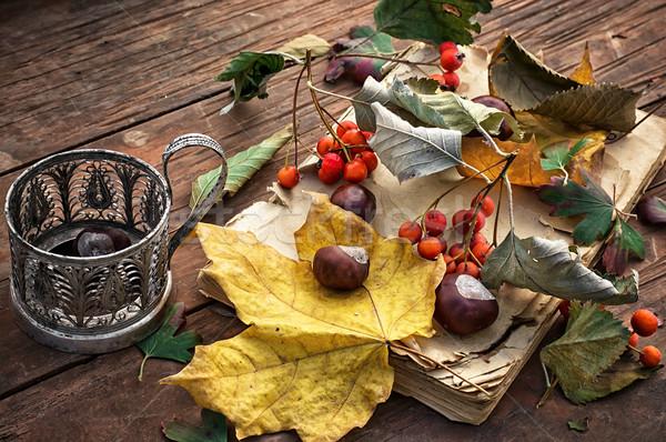 autumn leaf fall Stock photo © nikolaydonetsk