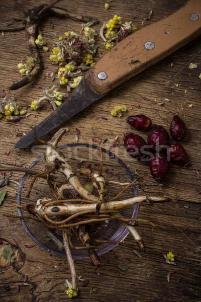 Zdjęcia stock: Korzeń · uzdrowienie · zioła · wzrosła · biodra · wiejski