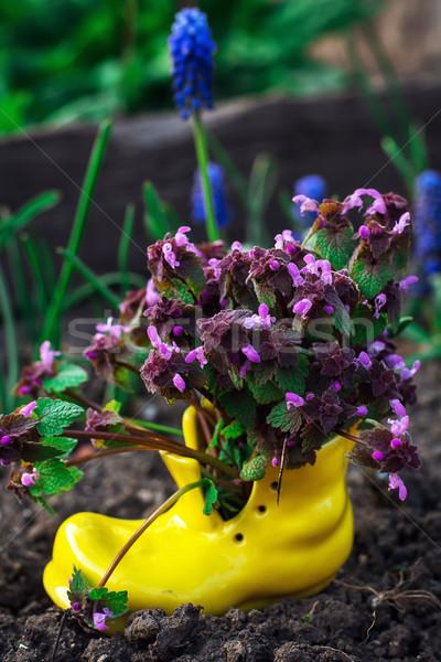 care of ornamental flowers in pots  Stock photo © nikolaydonetsk