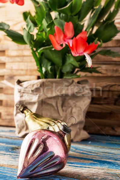 Christmas cactus  Stock photo © nikolaydonetsk