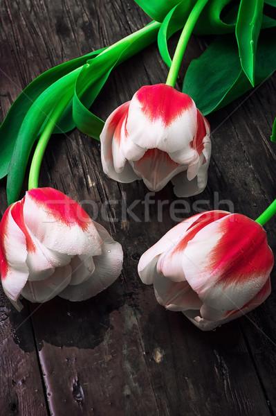 три белый красный тюльпаны Vintage Сток-фото © nikolaydonetsk