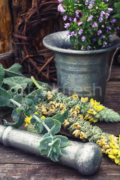 harvesting of medicinal herbs Stock photo © nikolaydonetsk