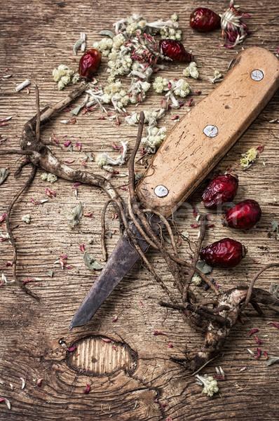 medicinal herbs and roots Stock photo © nikolaydonetsk
