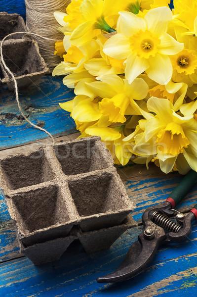 花束 水仙 木製 作業 工場 ストックフォト © nikolaydonetsk