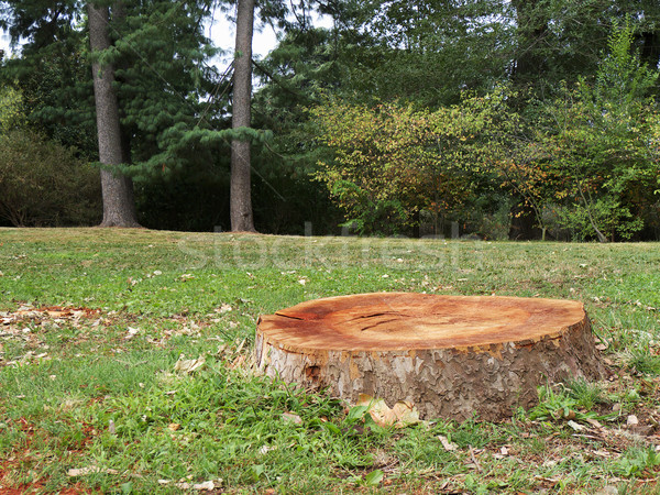 Tree Stump In The Forest Stock photo © NiroDesign