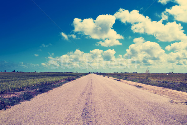 lonely road in the Ebro Delta, in Catalonia, Spain, filtered Stock photo © nito