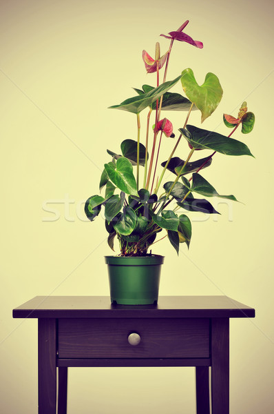 flamingo lily on a table with a retro effect Stock photo © nito