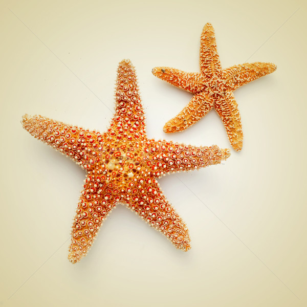 starfishes on a beige background, with a retro effect Stock photo © nito