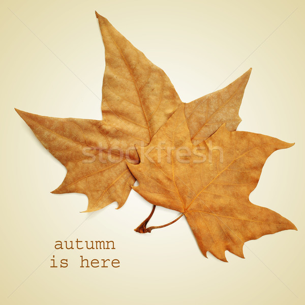 autumn is here Stock photo © nito