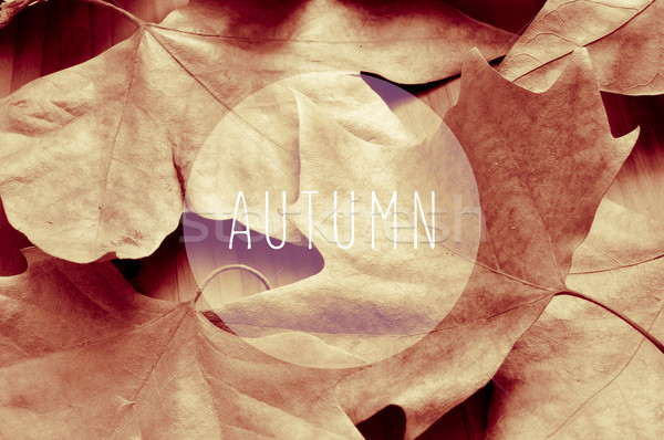 dried leaves and the word autumn, sepia toning Stock photo © nito