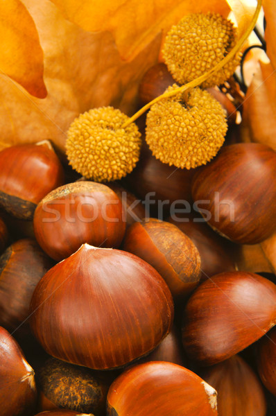 chestnuts and autumn leaves Stock photo © nito