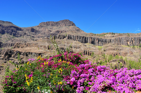 Gran Canaria, Spain Stock photo © nito