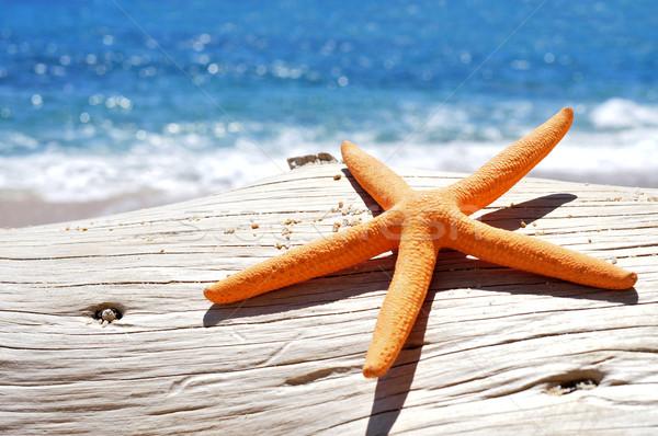 Narancs öreg fatörzs tengerpart közelkép fényes Stock fotó © nito