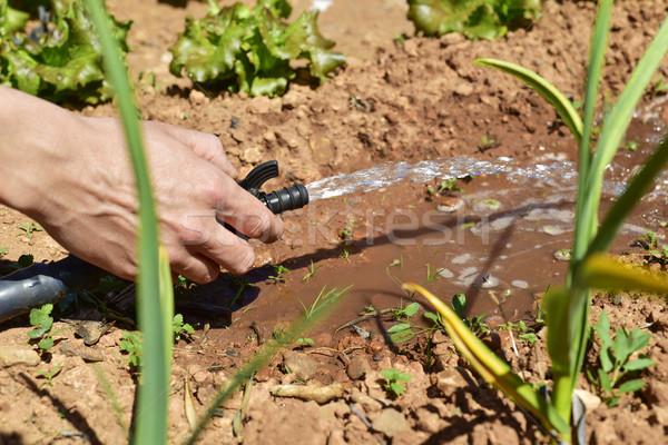 irrigating an organic orchard Stock photo © nito