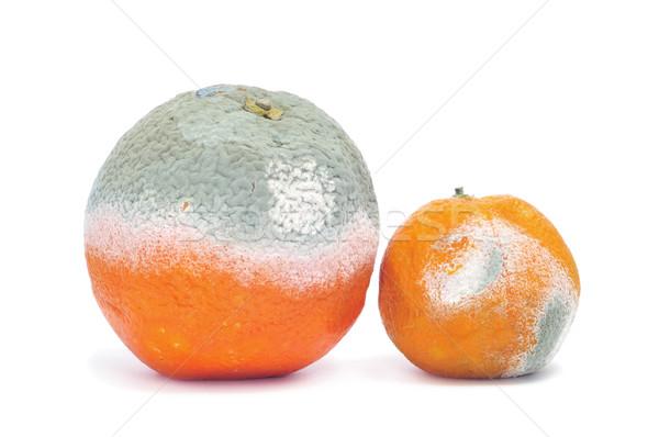 moldy orange and mandarine Stock photo © nito