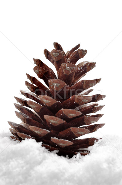 pine cone on the snow Stock photo © nito
