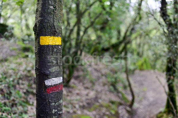 GR path mark in a tree in Spain Stock photo © nito