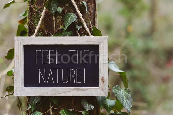 Tekst charakter drzewo Tablica wiszący lasu Zdjęcia stock © nito